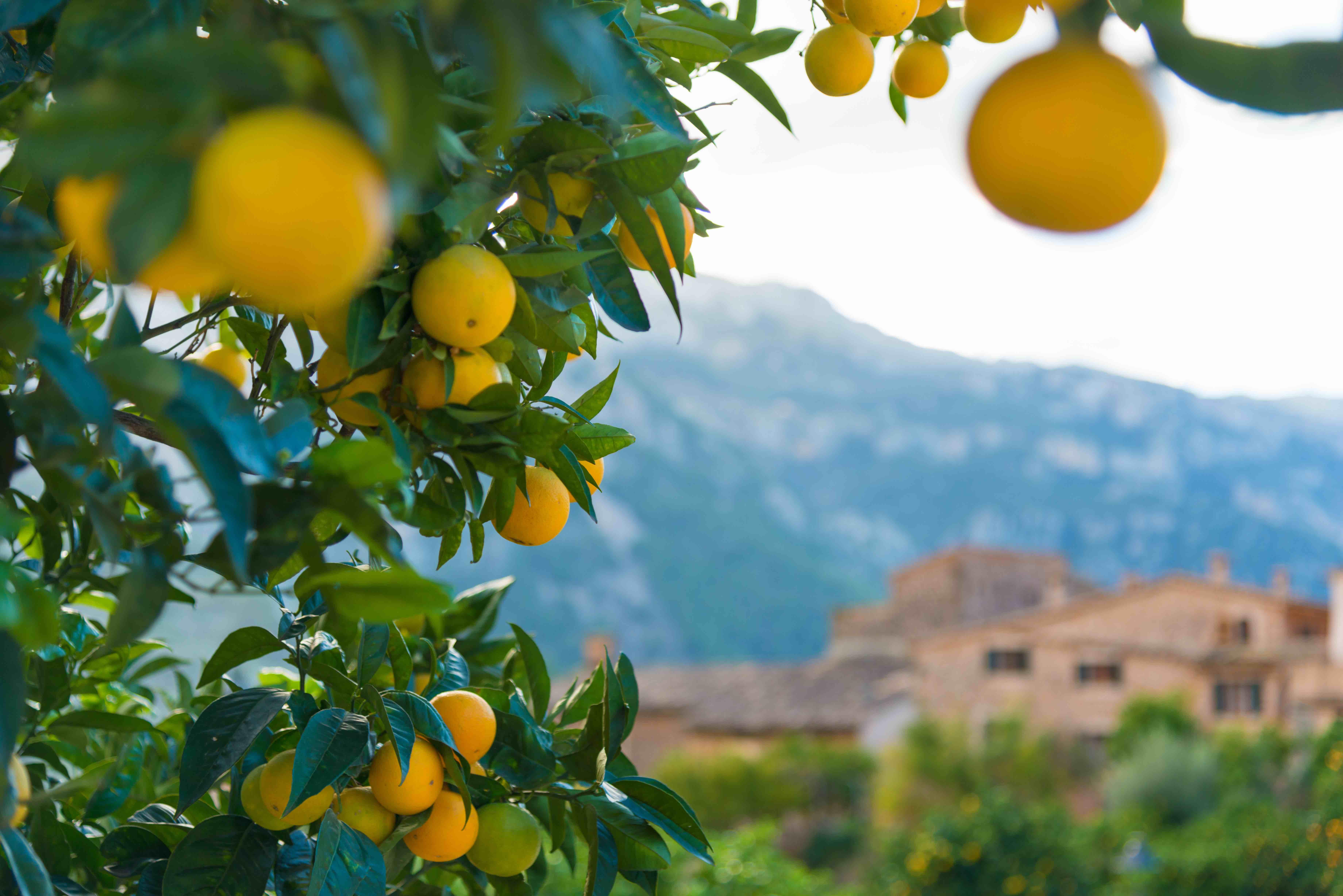 Aufstellungen Intensiv - Retreat für Glück und Erfolg vom 04.11. - 09. 11. 2019 auf Mallorca